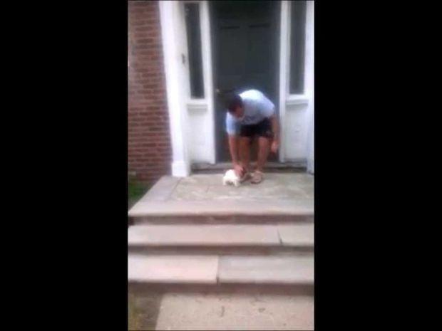 Το καλό το… κουταβάκι ξέρει κι άλλο μονοπάτι! Φοβήθηκε τα σκαλιά αλλά τη βρήκε τη λύση! (video)