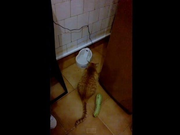 Δεν φαντάζεστε τι τρόμαξε αυτή τη γάτα - Δείτε την απίστευτη αντίδρασή της (video)