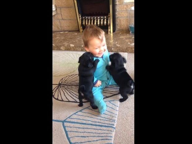 Δεν χορταίνει παιχνίδι - Λατρεύει τα σκυλάκια όσο τίποτα και δεν σταματά να το δείχνει! (video)
