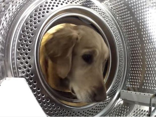 Υπέροχο: Σώζει το αρκουδάκι του από το… κακό πλυντήριο (video)