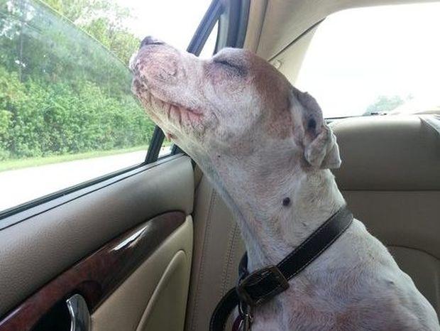 Θα σας κάνει να δακρύσετε: Η τελευταία βόλτα ενός γέρικου σκύλου