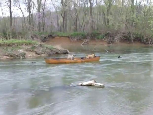 Απίστευτο! Δείτε το σκύλο ήρωα που έσωσε τους παγιδευμένους φίλους του στο νερό! (video)