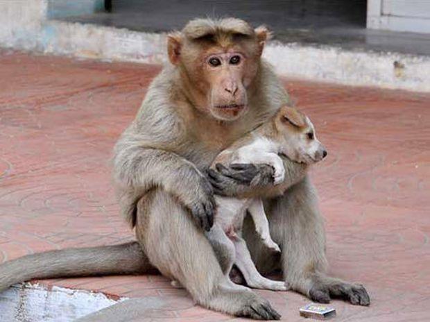 Απίστευτο! Αυτή η μαϊμού υιοθετεί και φροντίζει ένα αδέσποτο σκυλάκι! (photos)