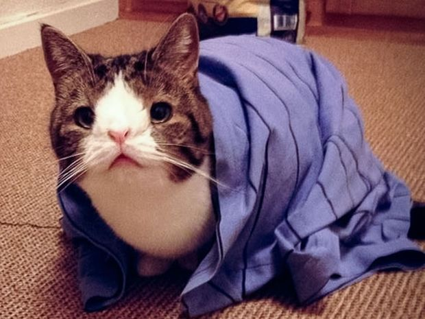 Δε φαντάζονταν τι θα ακολουθούσε όταν υιοθέτησαν αυτό το γατάκι! (photos)