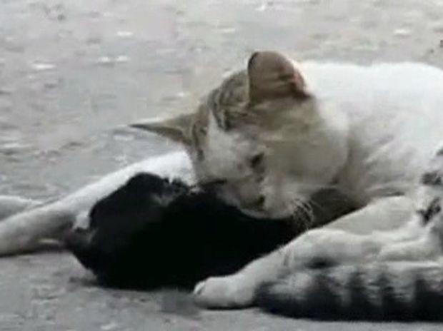 Αυτή η αδέσποτη γατούλα δίνει μαθήματα «ανθρωπιάς» και μας συγκινεί! (video)