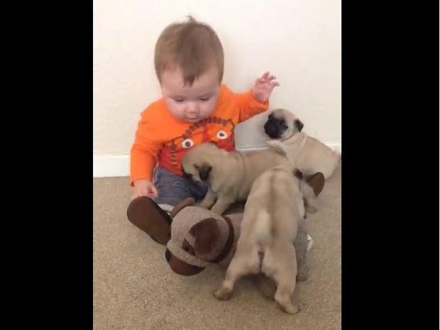 Ο μπόμπιρας δέχεται «επίθεση αγάπης» από τρία κουταβάκια κι ένα λούτρινο! (video)