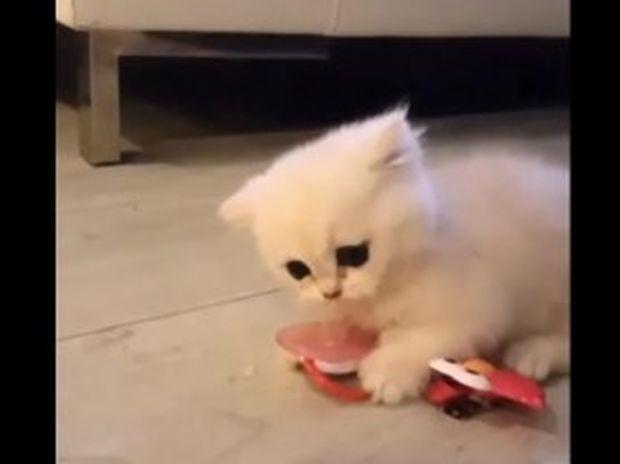 Ξεκαρδιστικό! Αυτό το γλυκό γατάκι δε θέλει με τίποτα να αποχωριστεί την πιπίλα! (video)