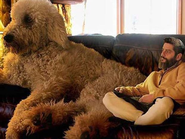 Ο φωτογράφος που ξετρέλανε το internet με τον τεραστίων διαστάσεων σκύλο του! (photos)