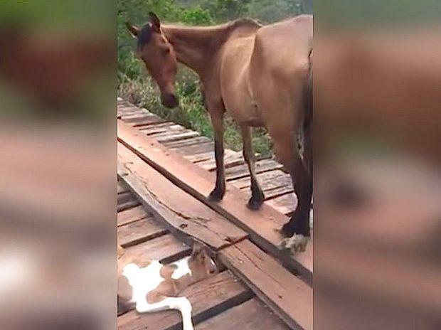 Η διάσωση του μικρού παγιδευμένου αλόγου είναι ό,τι πιο γλυκό θα δείτε σήμερα! (video)