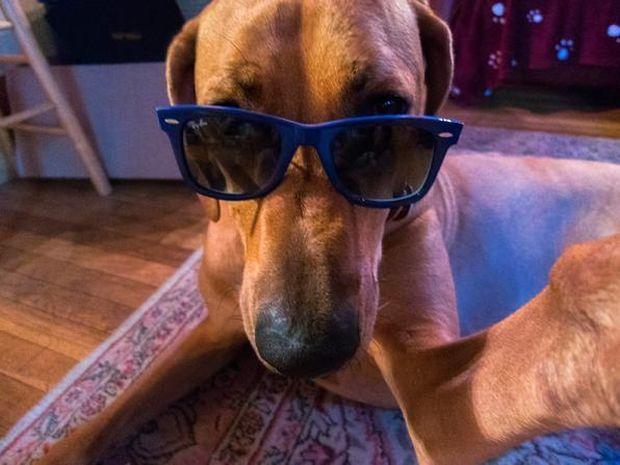 Νέα μόδα! Οι σκύλοι σε φωτογραφίες selfie! (photos)