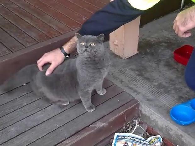 Δεν θα πιστεύετε τι κάνει αυτή η γάτα όταν τη χαϊδεύουν στο ευαίσθητο σημείο της! (video)