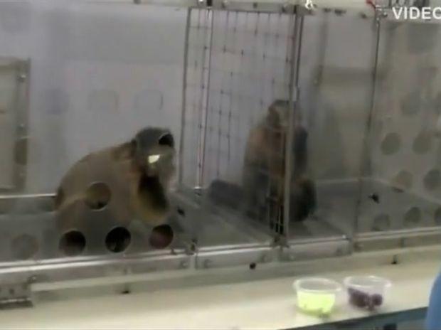 Θα λυθείτε στα γέλια! Δείτε πώς αντιδρούν αυτά τα ζωάκια στην αδικία! (video)