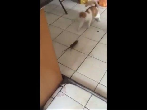 Το είδαμε κι αυτό! Ποντίκι κυνηγάει γάτα! (video)