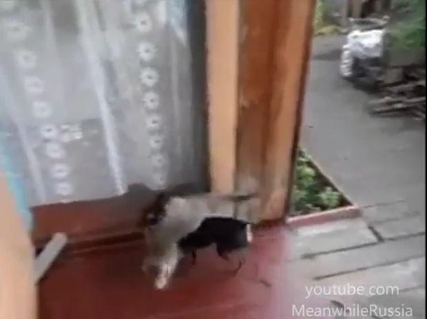 Η γάτα ήθελε να μείνει κι άλλο έξω. Ο σκύλος όμως είχε άλλη άποψη! (video)