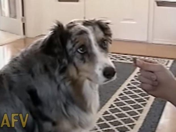 Θα λυθείτε στα γέλια! Ο σκύλος αρνείται να φάει για τον πιο αστείο λόγο! (video)