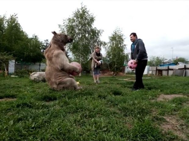 Απίστευτο! Η οικογένεια συγκατοικεί με μια αρκούδα για 23 χρόνια! (video)