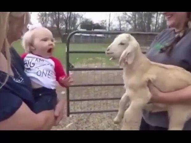 Ξεκαρδιστικό! Δείτε τη συζήτηση του μωρού και της κατσίκας! (video)