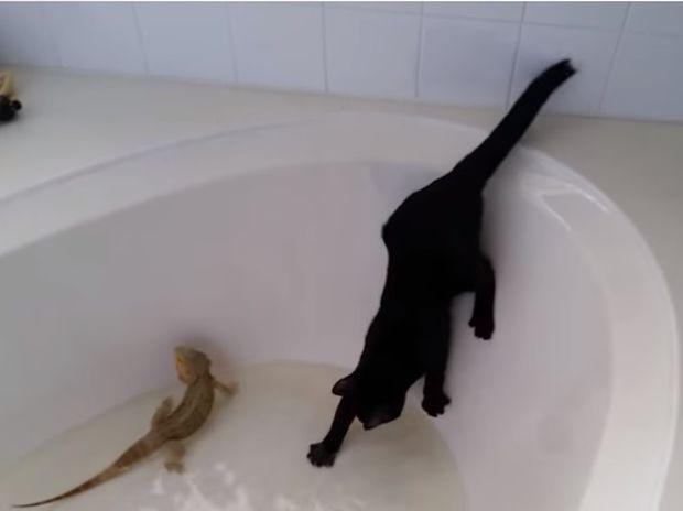 Επικό! Η περιέργεια... έβρεξε τη γάτα! (video)