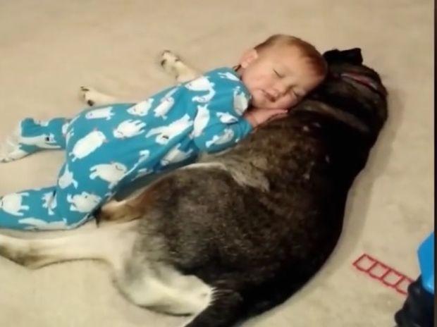 Ο νυσταγμένος μικρούλης και ο σκύλος - μαξιλάρι! (video)