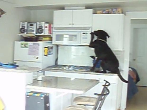 Ο σκυλάκος κάνει τα πάντα για να ξετρυπώσει τις κρυμμένες λιχουδιές! (video)