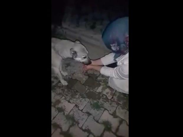 Ο διψασμένος σκυλάκος ευχαριστεί μια γυναίκα που του έδωσε νερό με τα χέρια της! (video)