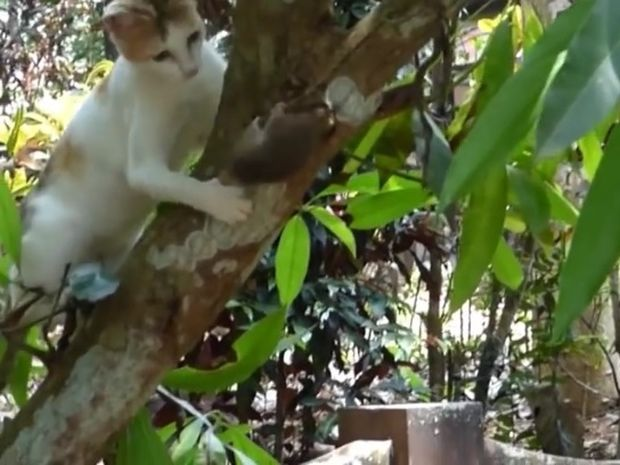 Καταδίωξη ενός ποντικού από δύο γάτες! Θα καταφέρει να τους ξεφύγει; (video)