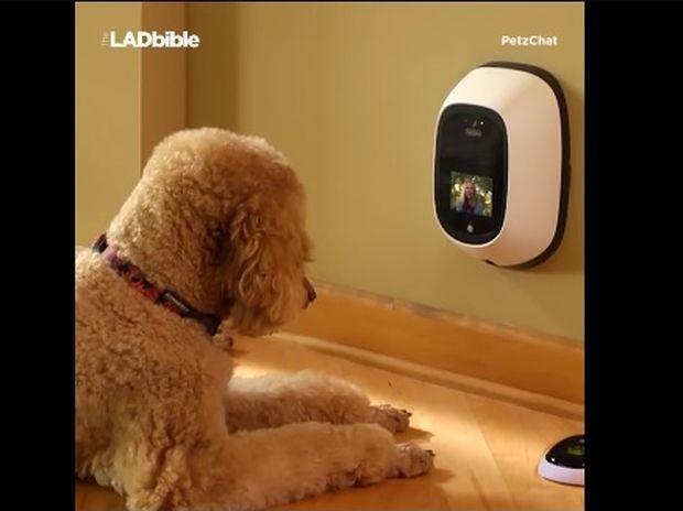 Ο σκύλος σας μπορεί πλέον να κάνει βιντεοκλήση! (video)