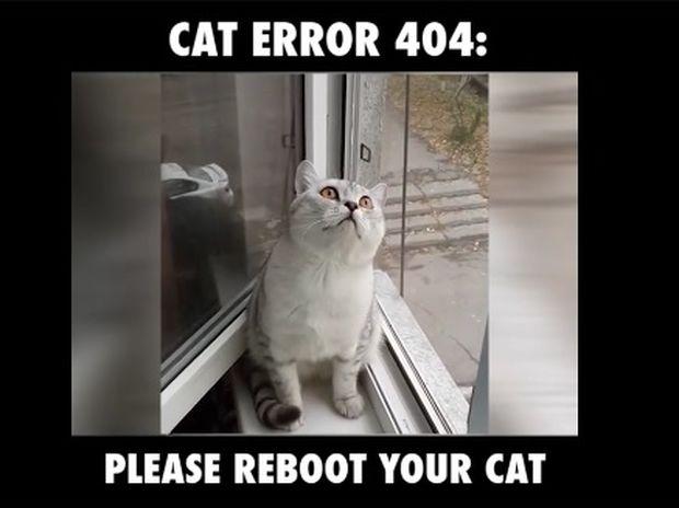Ξεκαρδιστικό! Η γάτα μάλλον χρειάζεται επανεκκίνηση για να «ξεκολλήσει»! (video)