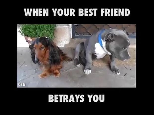 Όταν σε προδίδει ο καλύτερός σου φίλος! (video)