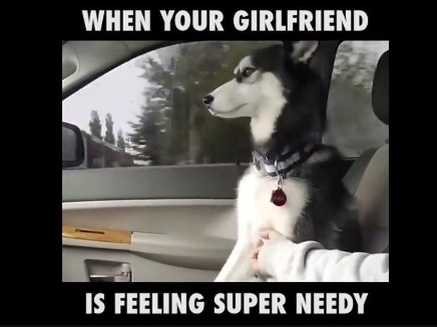 Αυτό το χάσκυ χρειάζεται συνέχεια προσοχή! (video)