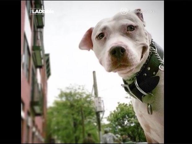 Ο σκυλάκος δεν μπορεί να σταματήσει να χαμογελάει! (video)
