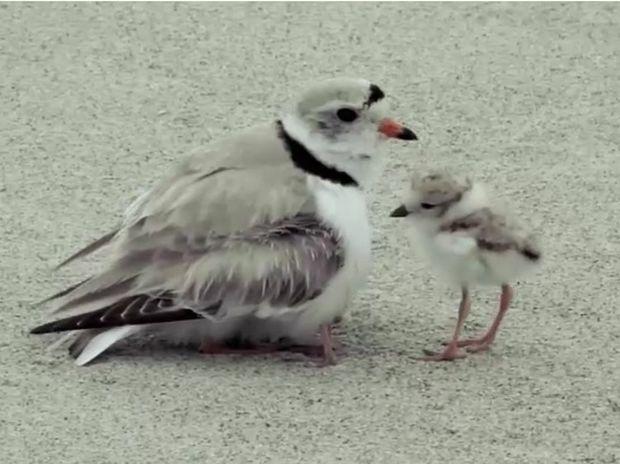 Εντυπωσιακό! Η αγκαλιά της μαμάς τους χωράει όλους! (video)