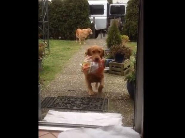 Εντυπωσιακό! Εκπαίδευσαν τα σκυλιά τους να κουβαλούν τα ψώνια! (video)