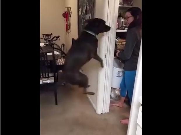 Αυτός πρέπει να είναι ο πιο εγκρατής σκύλος στον κόσμο! (video)