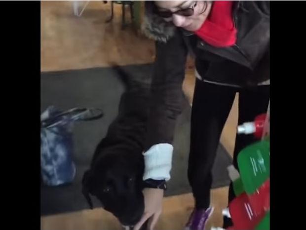 Ο σκυλάκος ξέρει ακριβώς πώς να ζητήσει τις λιχουδιές του! (video)