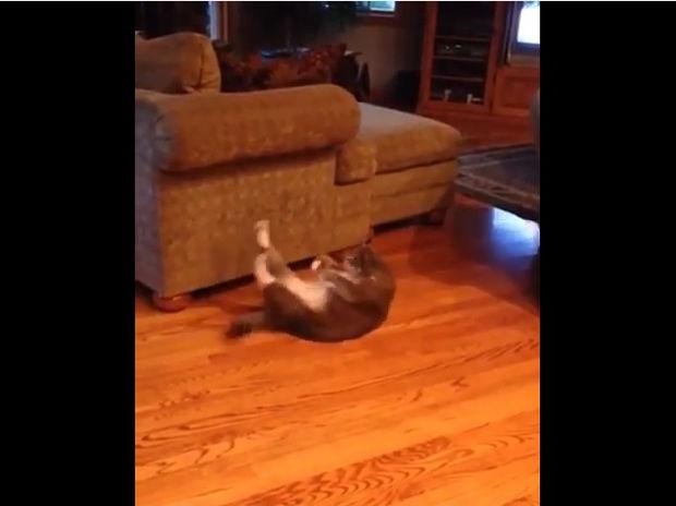 Το καλοκαίρι πλησιάζει και ο γάτος φροντίζει για τους κοιλιακούς του! (video)