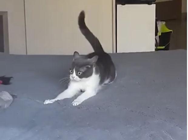 Ξεκαρδιστικό! Η γατούλα μάλλον έφαγε πολύ γατόχορτο! (video)