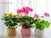 Ποιο λουλούδι αντιστοιχεί στο μήνα που γεννήθηκες και τι συμβολίζει;