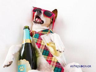 Πώς συμπεριφέρονται τα ζώδια, αν πιουν ένα... ποτηράκι παραπάνω;
