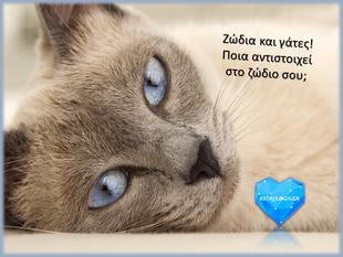 Ποια γάτα αντιστοιχεί στο ζώδιο σου;